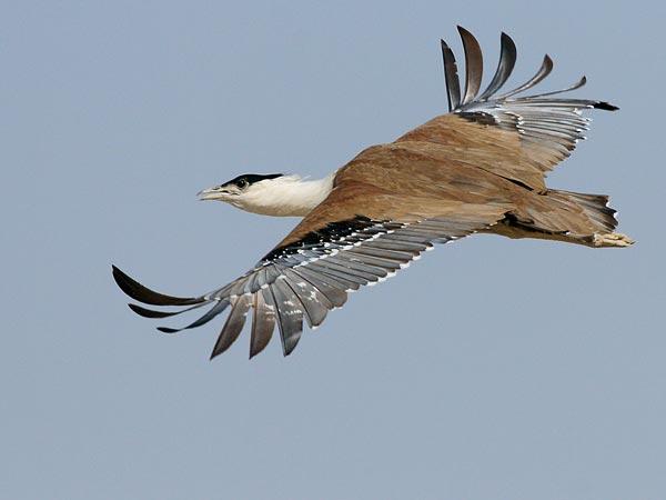 Extinct Animal Species in Pakistan Hyderabad News ...